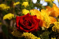 yellow rose and red rose bouquet