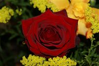 red rose romantic bouquet