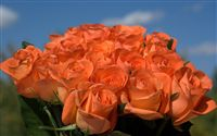 Orange roses bouquet