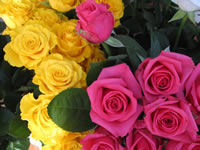 Roses Wallpaper Bouquet