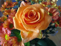 Orange Rose Wallpaper Bouquet