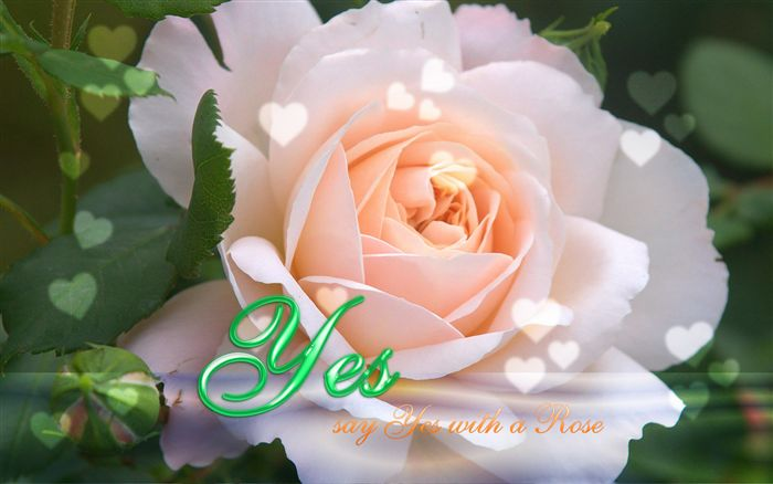 Say Yes with a Rose