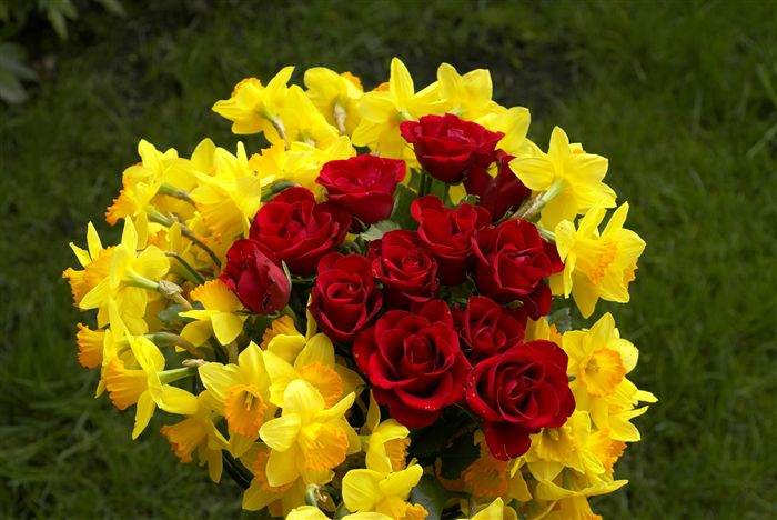 yellow narcissus and red roses