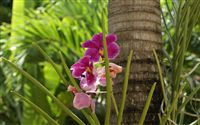 orchid and coconut tree