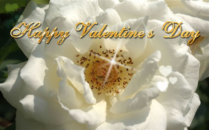 Happy Valentine's Day white rose