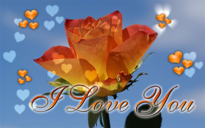 I Love you ecard orange rose