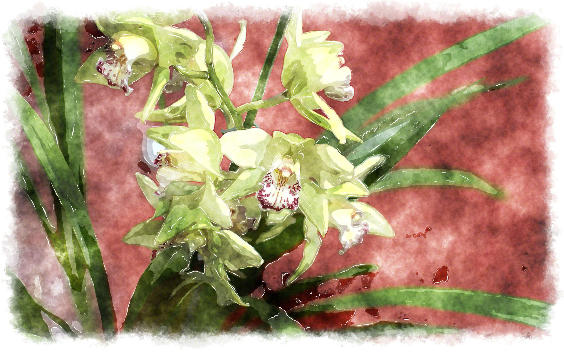 green cymbidium watercolor picture