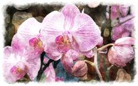 watercolor pink orchid