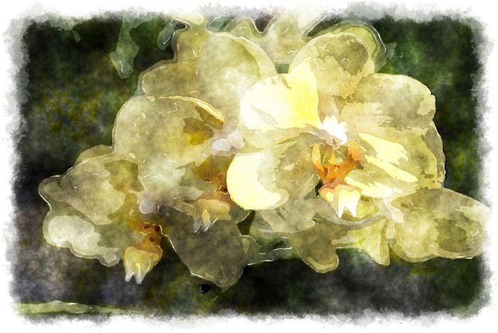 yellow orchid watercolor picture