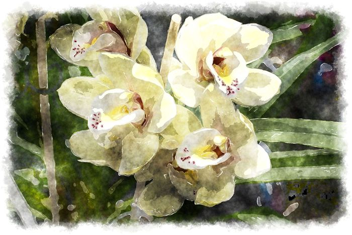 orchids watercolor wallpaper