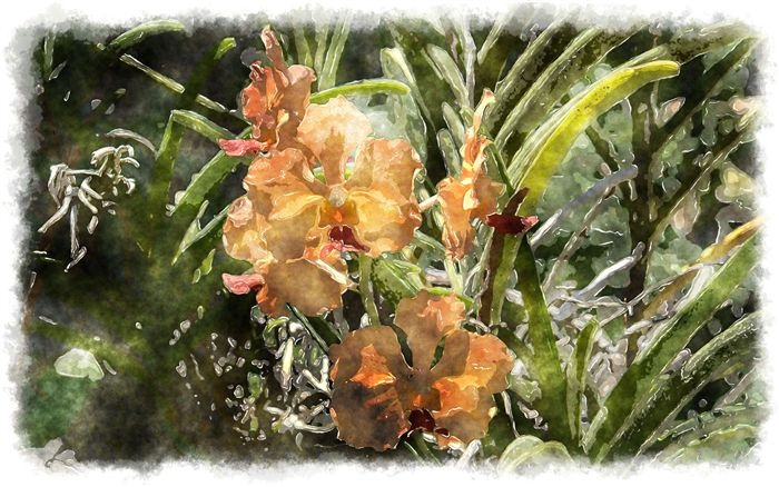 exotic orchid watercolor picture