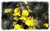 oncidium cebolleta watercolor painting