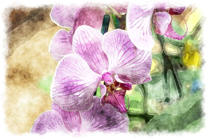pink phalaenopsis watercolor picture