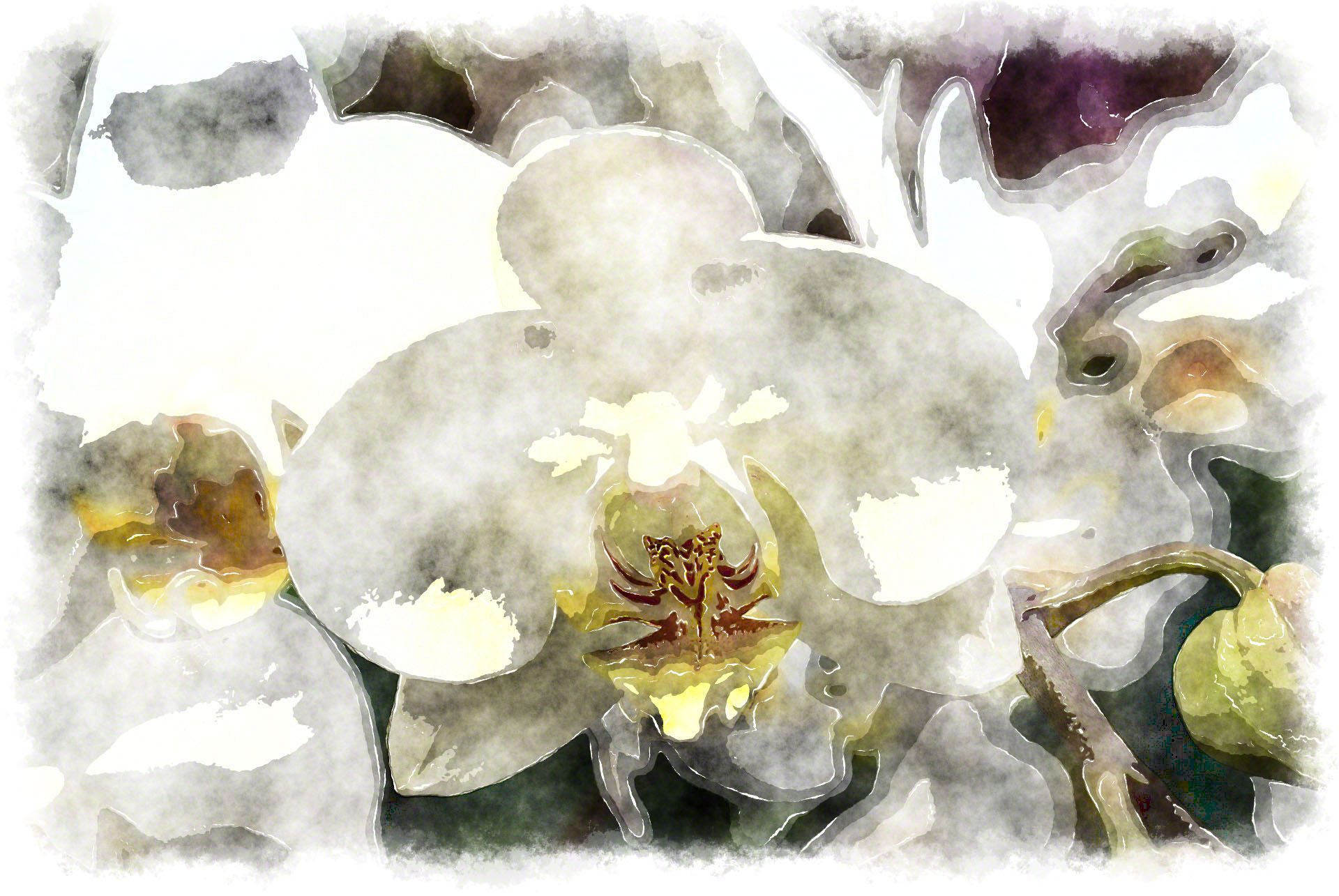 white phalaenopsis watercolor picture