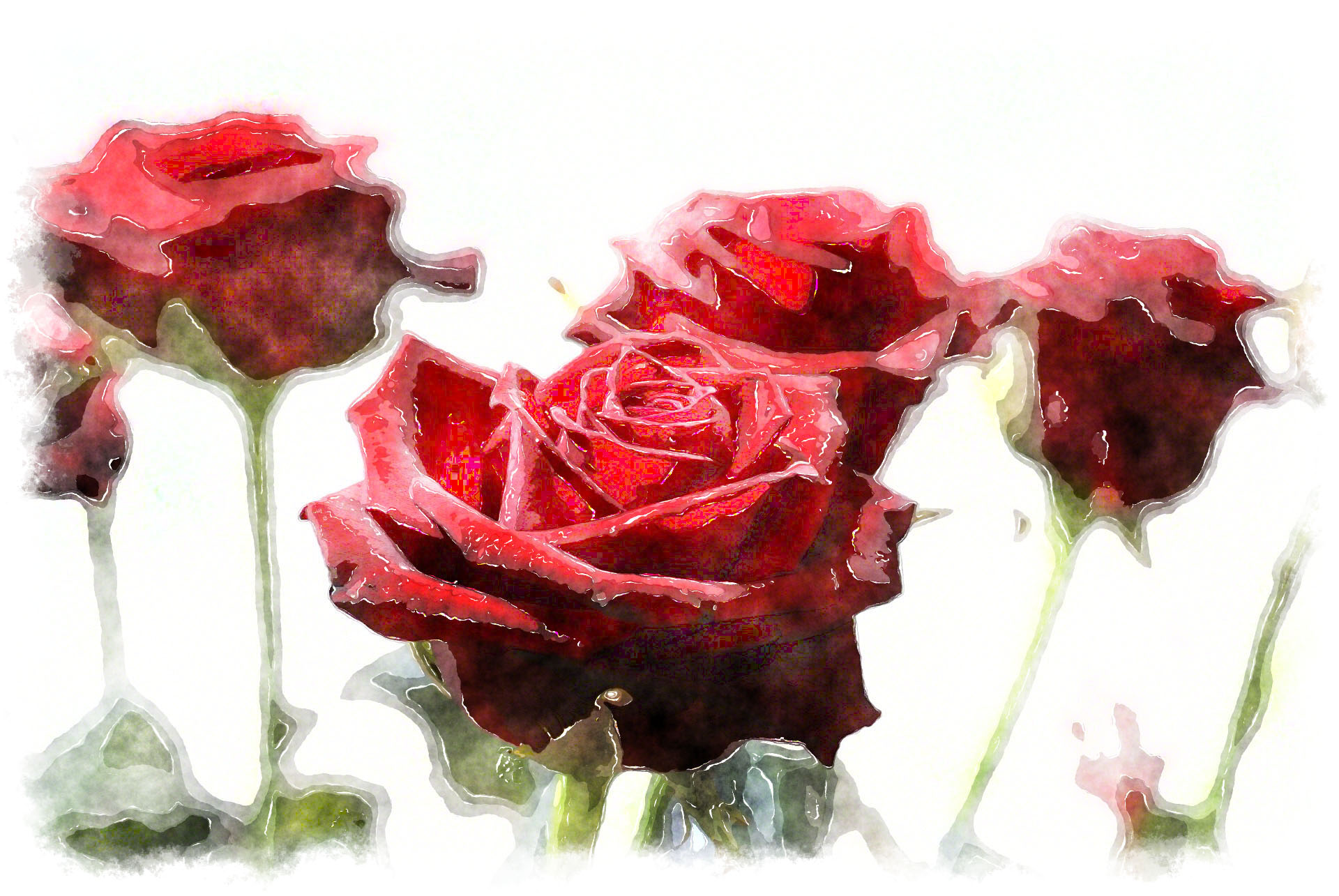 watercolor red roses