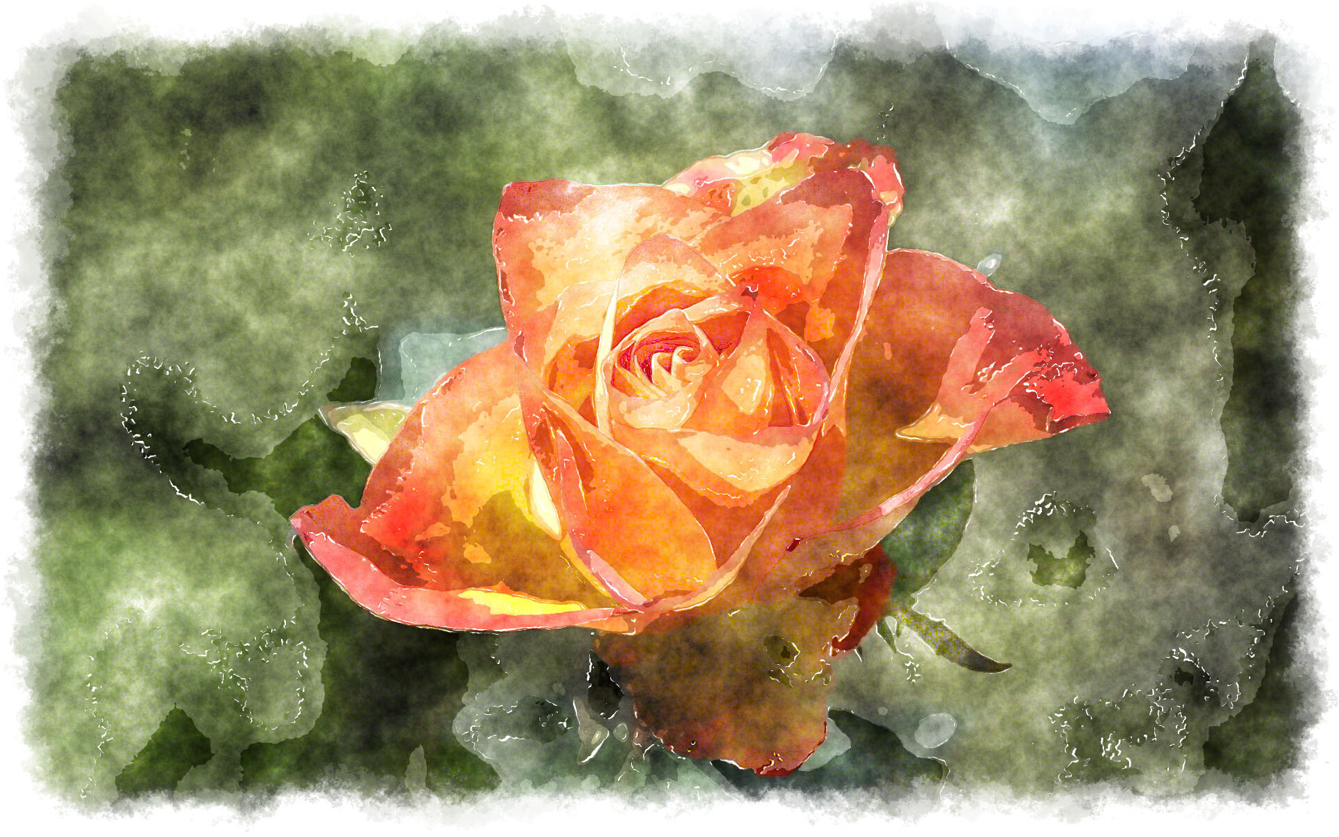 watercolor orange rose