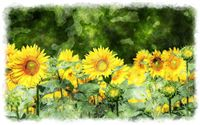 sunflower paintings