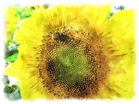 sunflower watercolor bee