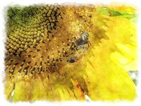 watercolor sunflower bee