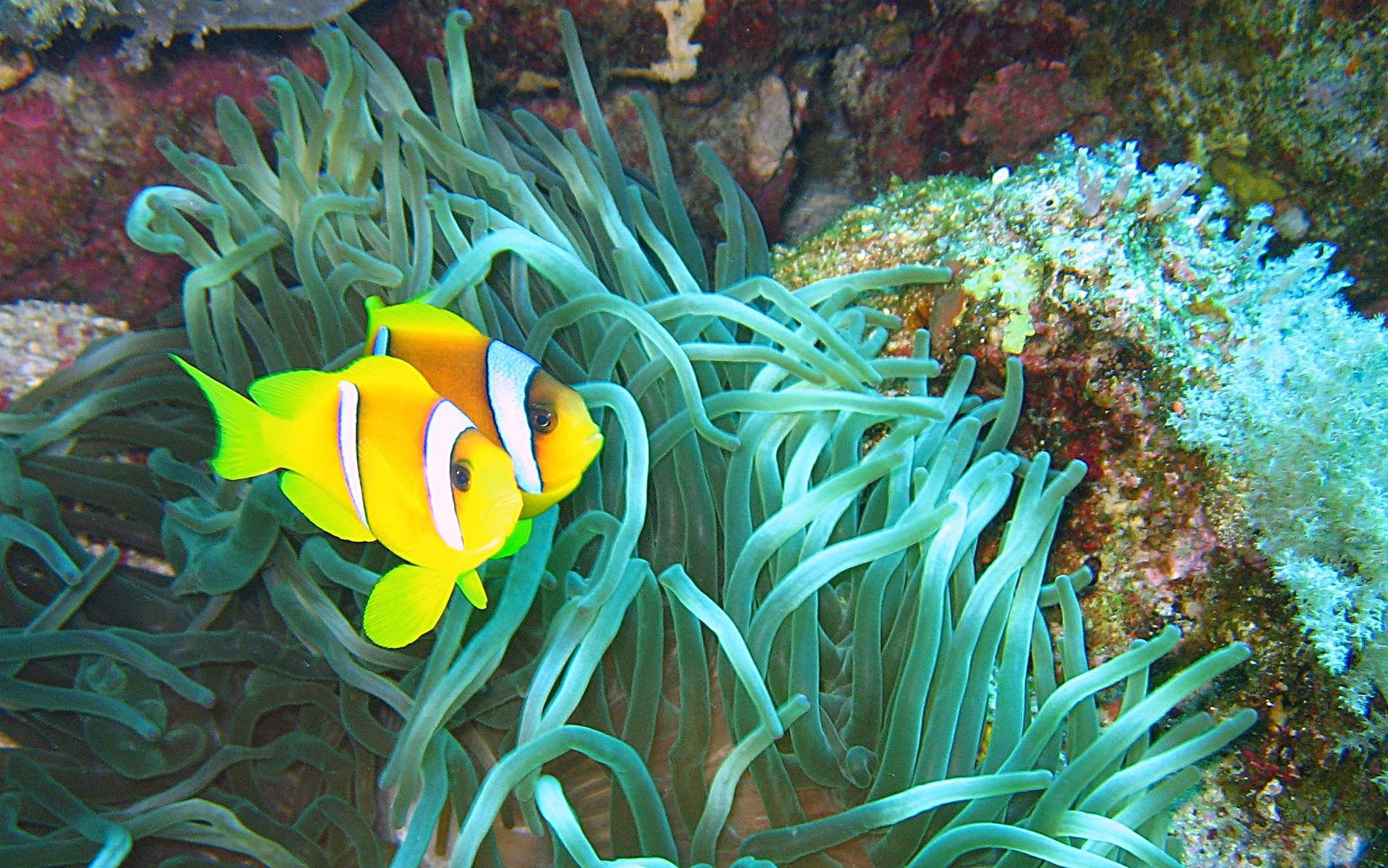 Orchid Flower Meaning amp Symbolism  Teleflora