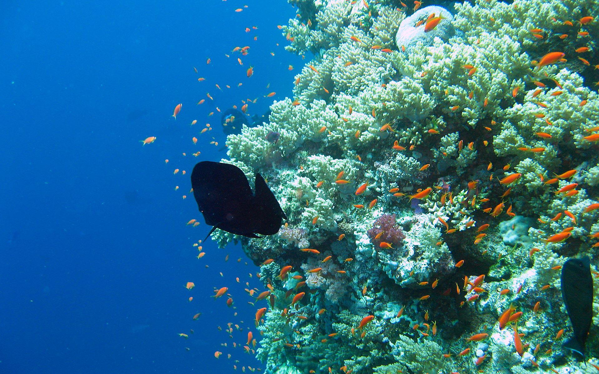 Underwater aquarium wallpaper